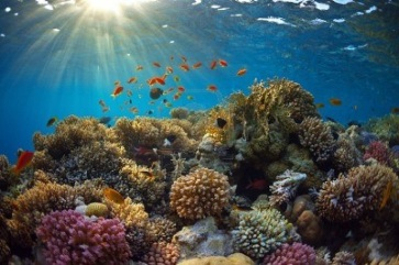 Koh_Tao_beautiful_coral_reef